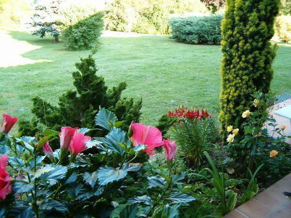 plate bande au jardin