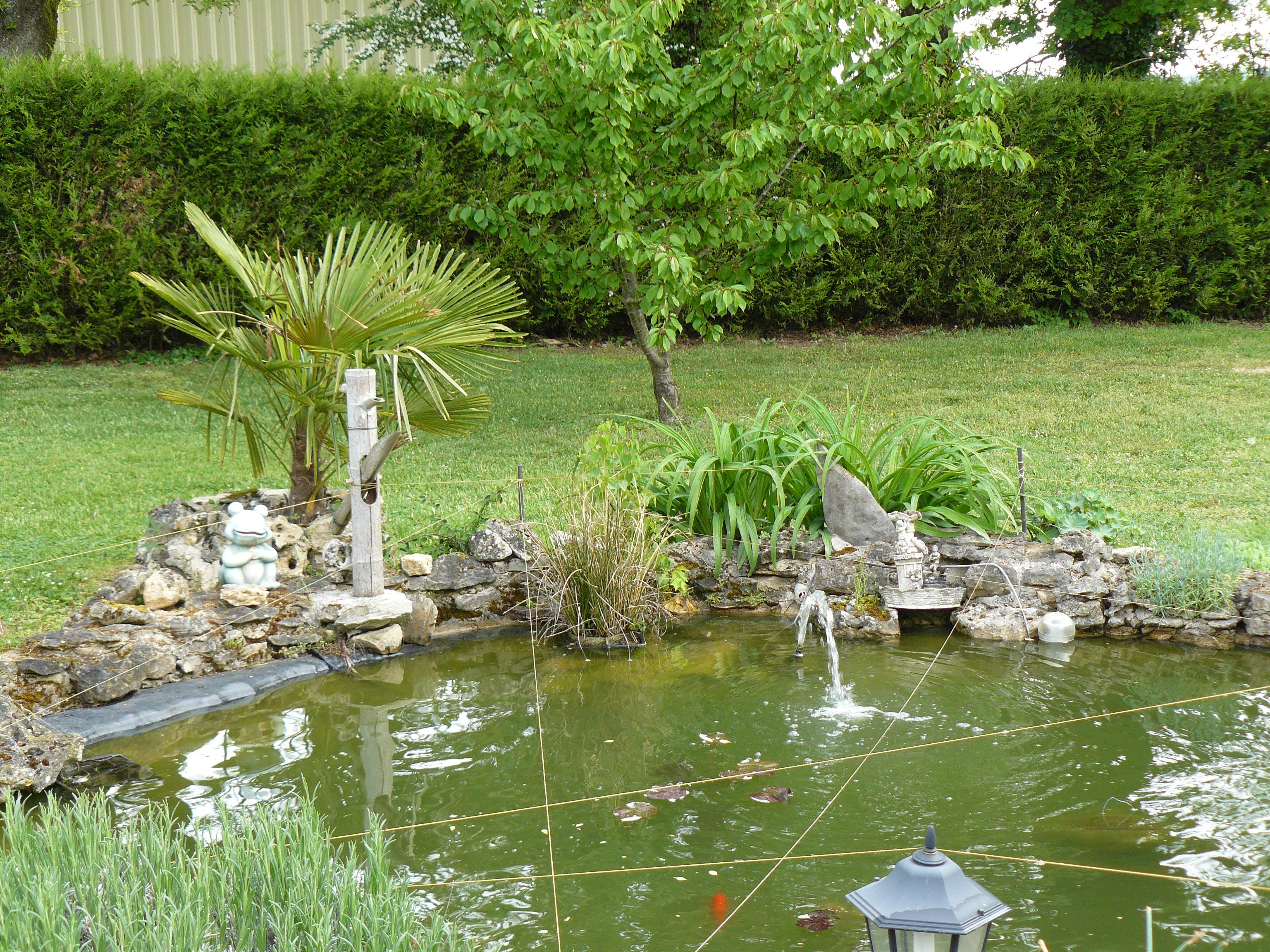 Jardinage for Creer bassin poisson